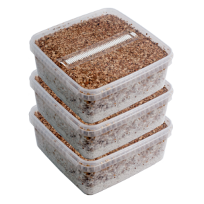 Mushroom Extract / vial